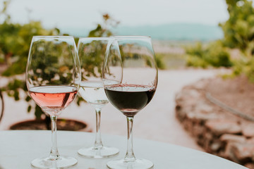 Aluminium Prints Vineyard 3 glasses of wine