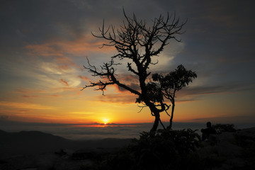 Man and tree silhouettes at sunrise in Brazil