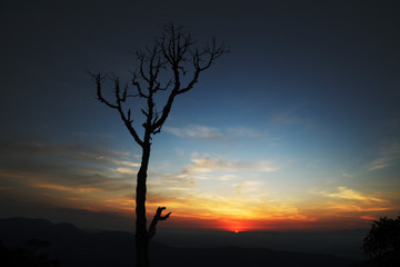 Tree silhouette at sunrise in Brazil