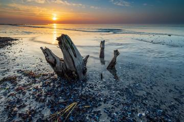 Baumstumpf und Muscheln am Strand der Ostsee, Sonnenuntergang, Darß, Deutschland