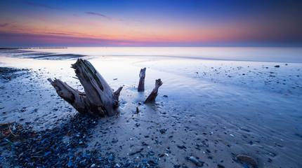Baumstumpf und Muscheln am Strand der Ostsee, Abendrot, Darß, Deutschland