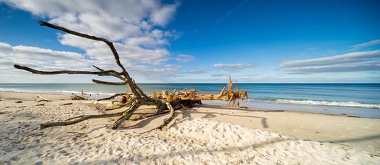 Entwurzelter Baum am Strand der Ostsee, Darss, Deutschland
