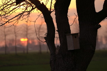 birdhouse on tree  with evening setting sun behind trees