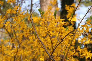 Beautiful Spring of Jeju Island / Flower Picture of Jeju Island, Korea
