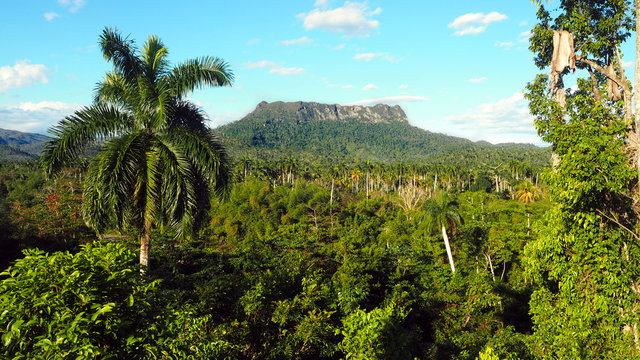El Yunque Tabletop Mountain Hike Near Baracoa in Cuba, February 2019