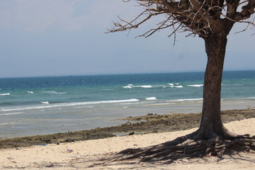 landscape trees on the island of Gili Ketapang