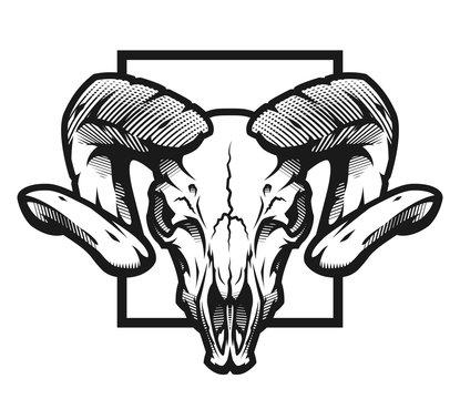 Ram skull, black and white emblem, illustration. Vector illustration.