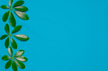 Three green leaves in the shape of fingers are on colored background