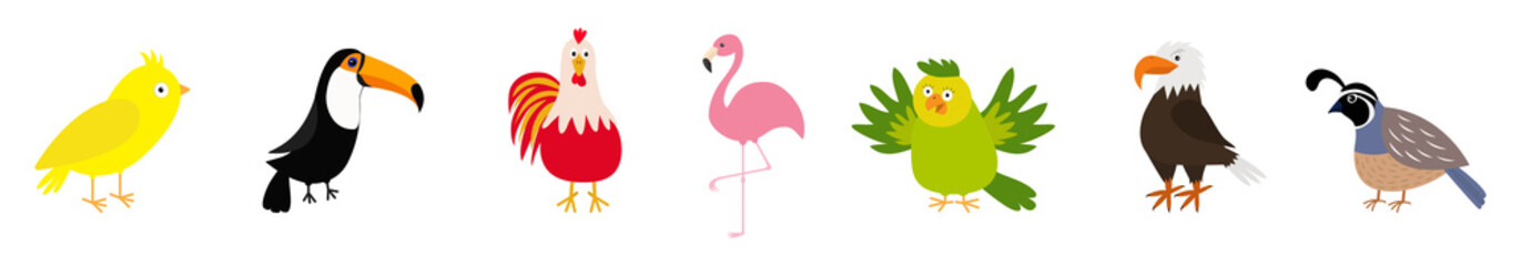 Bird set line. Canary, toucan, cock rooster, parrot, flamingo, eagle, quail. Cute cartoon characters icon. Baby animal zoo collection Isolated White background Flat design