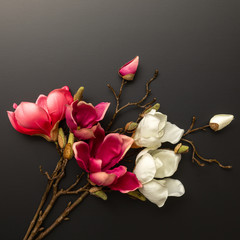 some magnolia flowers on a black background