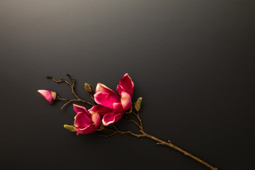 a magnolia flowers on a black background