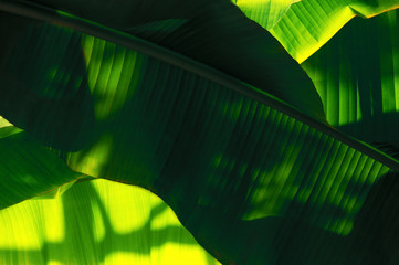 Wall Mural - plants of tropics, background of palm leaves