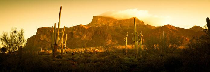 Foto op Plexiglas Cactus A saguaro cactus in the landscape of the desert of the American southwest.