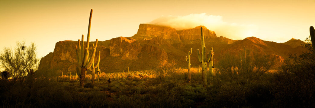 A saguaro cactus in the landscape of the desert of the American southwest.