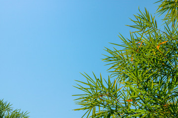The green bamboo leaves have a sharp number of characteristics around the edges. The edges are framed amidst the blue background.