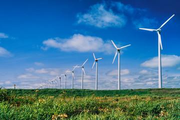 風力発電と牛の放牧