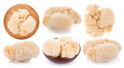 Fototapeta lion mane mushroom isolated on white background