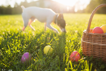 Easter eggs in a basket on the grass on a Sunny spring day close-up. running dog in the background