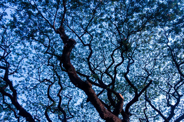 Abstract detail of tree branches in nauture with blue sky.