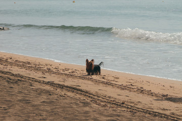 Dog on walk on autumn beach. Santa Marinella, Italy