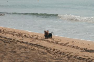 Dog on walk on autumn beach. Santa Marinella, Italy