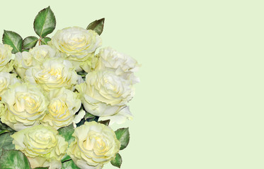 Beautiful floral background with white roses bouquet