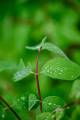 green spring foliage macro close up in nature