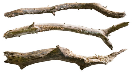 Dry tree branch isolated on white background. Broken branches Wall mural