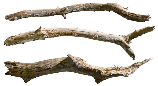 Dry tree branch isolated on white background. Broken branches