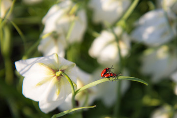 two bugs on flower