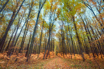 Wide View of Autumn Forest