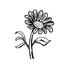 Hand Drawn flower doodle. Sketch style icon. Decoration element. Isolated on white background. Flat design. Vector illustration