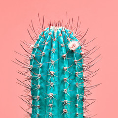 Photo sur Plexiglas Cactus Cactus green colored on coral background. Minimalism. Contemporary Art gallery Style. Creative fashion concept. Close-up tropical fashionable plant, pastel color