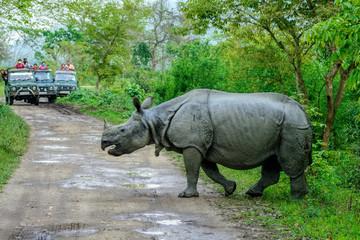 Indian one horned Rhinoceros at Kaziranga National Park