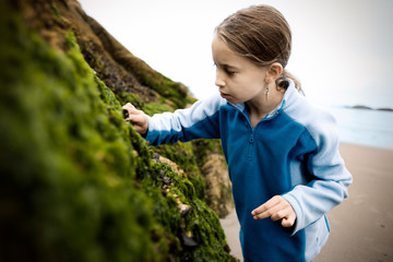 Young girl cautiously reaches out to touch a mussel on a seaweed covered rock on a beach.