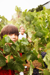 Portrait of a young boy standing next to a grape vine in a vineyard with his friend.
