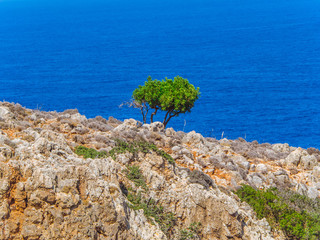 Lonely fresh green tree on a rocky mountain - blue sea in the background