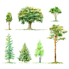 Oak,birch,pine,spruce.Deciduous and conifers tree.Watercolor hand drawn illustration.White background.