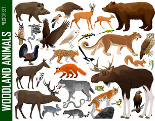 vector set of woodland animals