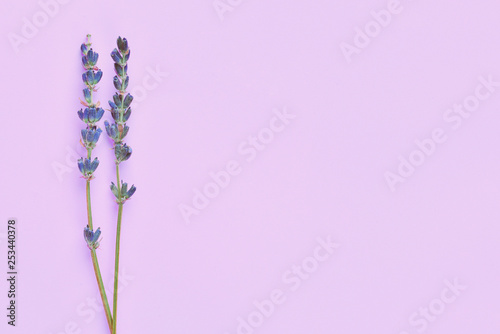 violet lavender flowers arranged on bright purple violet background. Top view, flat lay. Minimal concept flowers composition. Valentine's Day, Mother's Day mockup. .