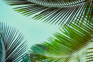 Coconut palm tree under blue sky. Vintage background. Retro toned poster.
