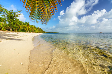 Palm tree leaf over ocean water on tropical beach in Dominican republic