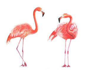Flamingo watercolor illustration bird tropics jungle pink