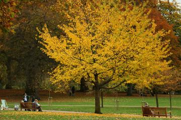 paesaggio colorato autunnale in un parco di londra
