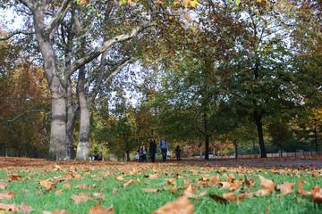 paesaggio colorato autunnale in un parco di londra, con foglie secche sul prato