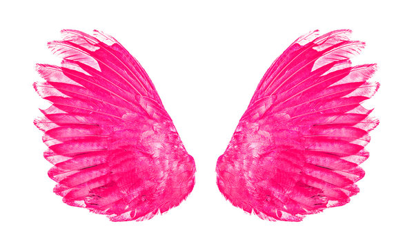 pink wings an isolated on white background