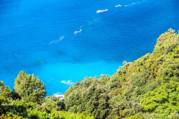 Tropical plants next to the Mediterranean Sea
