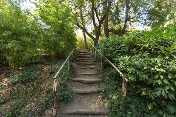 Beautiful wooden natural stairs in Tbilisi botanical garden, Georgia 2018 summer