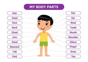 My body parts - anatomy for children. Cartoon character, vector illustration. Card for the study guide. For use in animation, applications, printing.