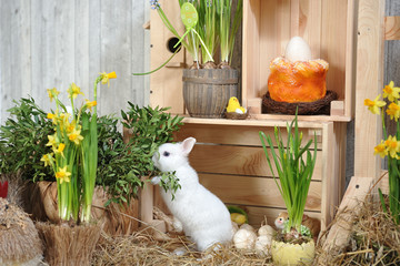 A small and curious white rabbit with blue eyes, stands on its hind legs on dry hay in a studio with Easter decor. Studio photography